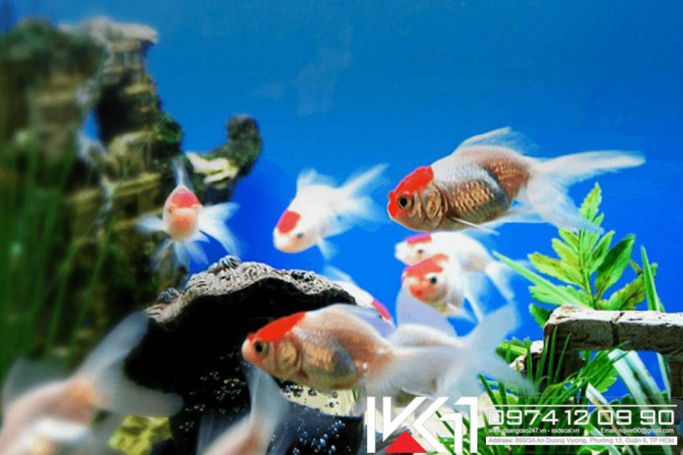 Cách nuôi cá cảnh đẹp không bị chết