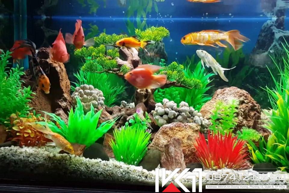 Bể cá cảnh giá rẻ tại HCM